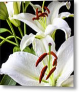 Three White Lilies Metal Print by Garry Gay