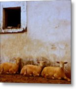 Three Wise Sheep Metal Print by Maggie McLaughlin