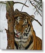 Tiger 3 Metal Print by Ernie Echols