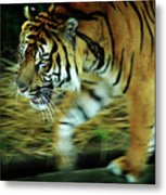 Tiger Burning Bright Metal Print by Rebecca Sherman