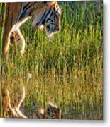 Tiger Tiger Burning Bright Metal Print by Melody Watson