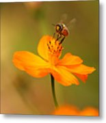 Tiny Dancer Metal Print by Marion Cullen