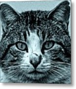 Tom Cat Metal Print by Tony Grider