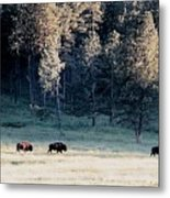 Trail Of Bulls Metal Print by Jan Amiss Photography