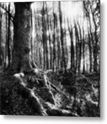 Trees At The Entrance To The Valley Of No Return Metal Print by Simon Marsden
