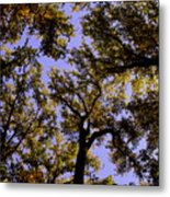Trees Conversing Metal Print by Deborah  Crew-Johnson