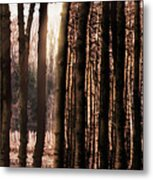 Trees Gathering Metal Print by Wim Lanclus