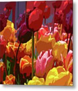 Tulip Confusion Metal Print by Sharon Talson