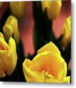 Tulips Metal Print by Matt Truiano