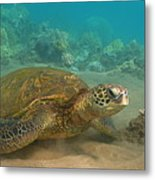 Turtle Magic Metal Print by Brian Governale