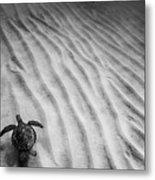 Turtle Ridge Metal Print by Sean Davey
