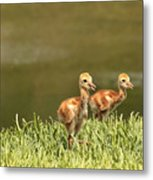 Two Chicks Metal Print by Carol Groenen