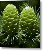 Two Pinecones Metal Print by Svetlana Sewell