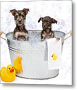 Two Scruffy Puppies In A Tub Metal Print by Susan Schmitz