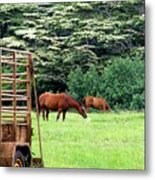 Under The Albesias Metal Print by Mary Deal