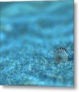 Underwater Seashell - Jersey Shore Metal Print by Angie Tirado