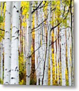 Uphill Metal Print by The Forests Edge Photography - Diane Sandoval