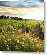 Vineyard Metal Print by Carlos Caetano