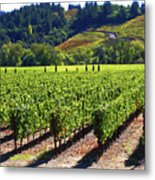 Vineyards In Sonoma County Metal Print by Charlene Mitchell