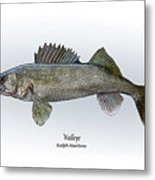 Walleye Metal Print by Ralph Martens
