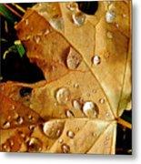 Water Drops Metal Print by Liz Vernand