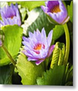 Water Lilies Metal Print by Ray Laskowitz - Printscapes