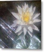 Water Lily In Sunlight Metal Print by Jeff Kolker