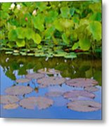 Water Lily Sky Metal Print by Nada Frazier