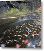 West Fork Oak Creek And Fall Color Metal Print by Rich Reid