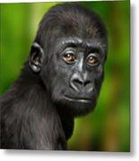 Western Lowland Gorilla Baby Metal Print by Julie L Hoddinott