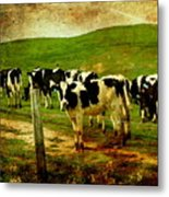 When The Cows Come Home . Photoart Metal Print by Wingsdomain Art and Photography