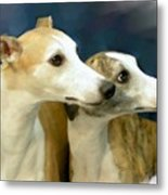 Whippet Watching Metal Print by Maxine Bochnia