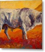 White Bull Metal Print by Marion Rose