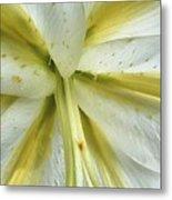 White Lily Metal Print by Beth Akerman