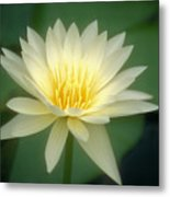 White Lily Metal Print by Ron Dahlquist - Printscapes