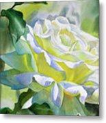 White Rose With Yellow Glow Metal Print by Sharon Freeman