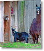 Who The Heck Are You Metal Print by Brenda Leitow