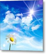 Wild Daisy In The Grass Against Bleu Sky Metal Print by Sandra Cunningham