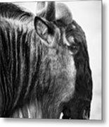 Wildebeest Metal Print by Adam Romanowicz