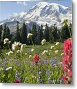 Wildflowers In Mount Rainier National Metal Print by Dan Sherwood