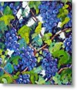 Wine On The Vine Metal Print by Richard T Pranke