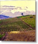 Wine Vineyard In Sicily Metal Print by Madeline Ellis
