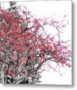 Winter Berries Metal Print by Scott Hovind