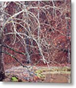 Winter In Arkansas Metal Print by Fred Lassmann