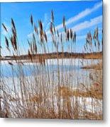 Winter In The Salt Marsh Metal Print by Catherine Reusch  Daley