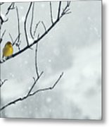 Winter Snow With A Touch Of Goldfinch For Color Metal Print by Laura Mountainspring