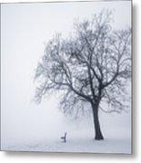Winter Tree And Bench In Fog Metal Print by Elena Elisseeva