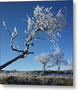 Winter Tree. Metal Print by Bernard Jaubert