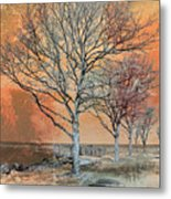 Winter's Dawn Metal Print by Shawna Rowe