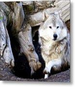 Wolf Den 1 Metal Print by Marty Koch